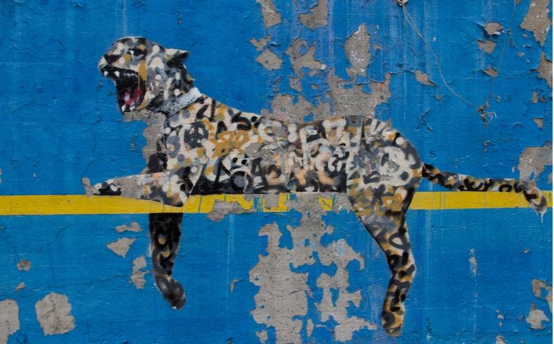 tigre banksy